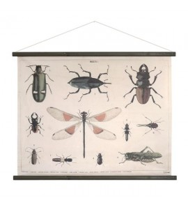 INSECTS SCHOOL CHARTS XL